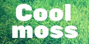 coolmoss